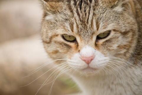 こちらを見るネコ