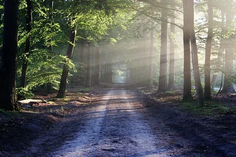 道と差し込む光