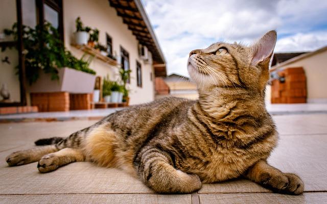 空を見上げる猫ちゃん